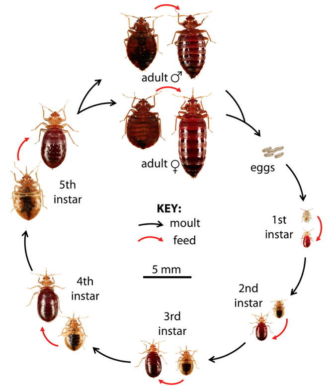 Identification And Life Cycle Rest Assured Pest Control